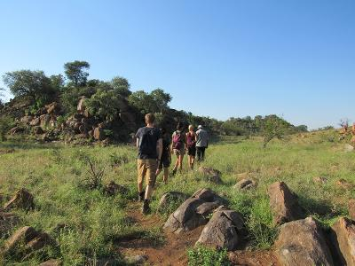 Volunteers patrol on foot checking for snares