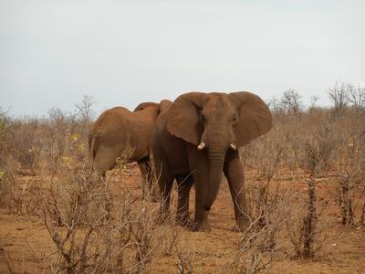 Elephants spotted on a game drive