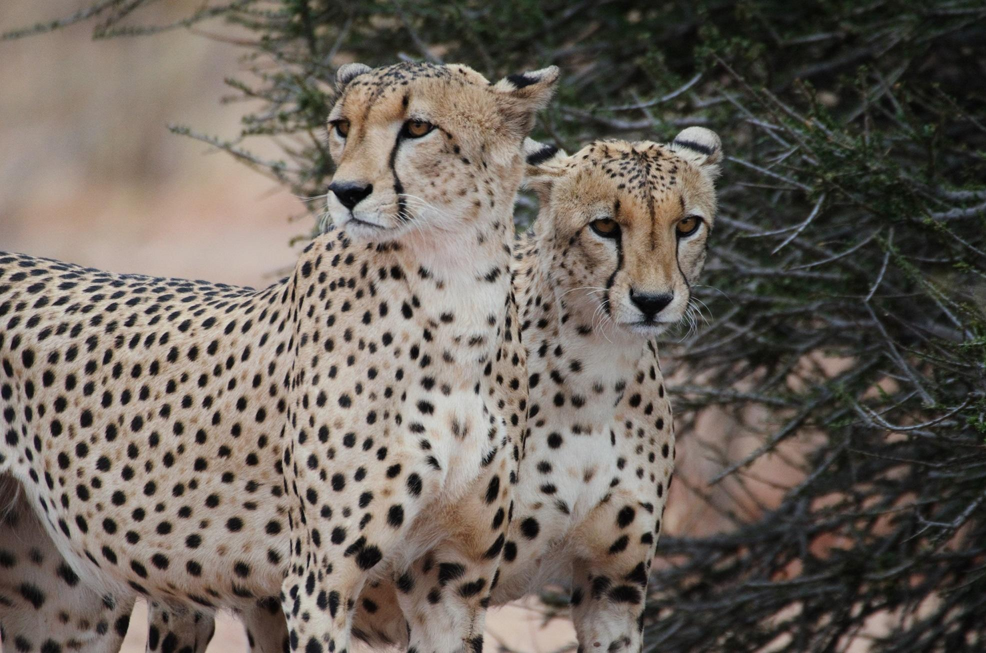 Volunteers spot wild animals during a game drive