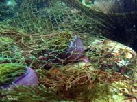 Big net on MuSangNua
