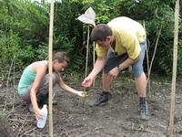 Cleaning our mangrove trees