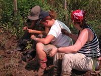 Cutting mangrove roots