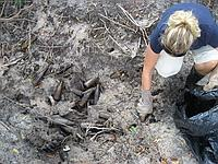 Removing bottles from mangrove mud