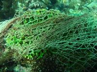 Branching coral covered with fishing net