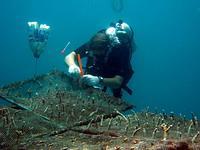 Measuring coral at Viking Cave