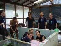 Scrubbing aquarium at fisheries department