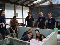Scrubbing aquarium at fisheries department