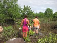 Saplings are taken to the planting site