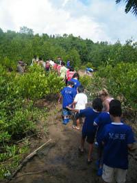 Mangrove day