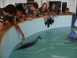 Rescued dolphin