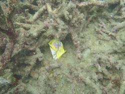 Litter on the reef