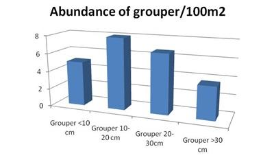 Abundance of grouper