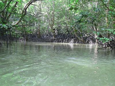 Learning about Mangrove Ecology in Thailand with Projects Abroad