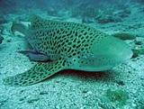 Latest news from our Thailand Marine Conservation Project