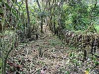 The Inca Road