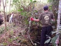 Clearing section of the Inca Trail