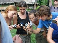 Crowding around the coral snake