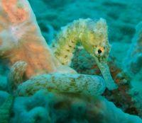 Seahorse Experts Visit Cambodia Conservation Project