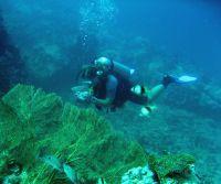"Conservation volunteers in Thailand ""Dive against Debris"""