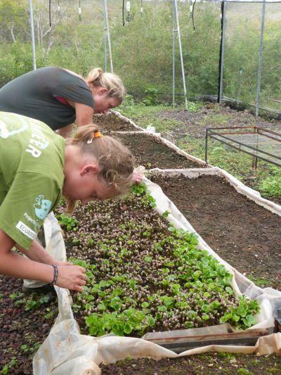 Volunteers attending to seedlings.