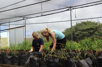 Volunteers working in the new nursery