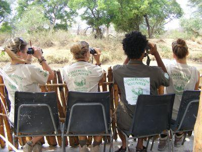 Bird counting takes place twice a year in Botswana