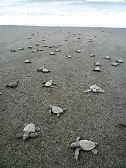 Schildkrötenschutz in Mexiko