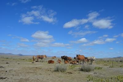 Entdecke die Mongolei
