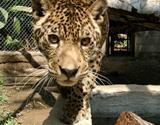 1000. Freiwillige im Naturschutz Peru