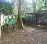 Unser ökologisches Reservat Taricaya in Peru erhält tierischen Zuwachs!