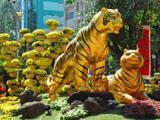 """""""Happy New Year – Vietnamesisches Neujahrsfest in Hanoi"""""""