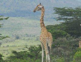 Naturschutz-Projekt in Kenia
