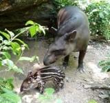 Willkommen Theo! Nachwuchs im Naturschutz - Projekt in Peru