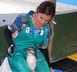 Erfolg im Tierpflege - Projekt in Kapstadt: Freiwillige entlassen Pinguine in die Freiheit