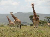 Projects Abroad Naturschutz-Projekt in Kenia startet im Soysambu Reservat