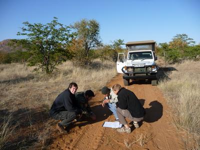 Freiwillige haben auf der Straße in Südafrika tierische Fußspuren entdeckt.