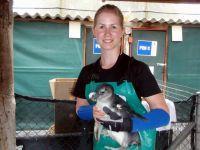 Min tid med pingvinerne
