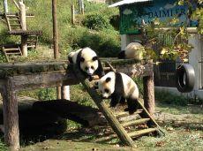 dyrepasning i kina
