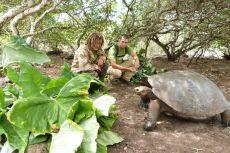 Frivillige observerer skildpadde på Galapagos