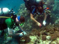 Vores kamp mod plastik i havet