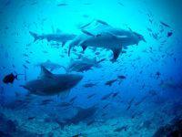 Samarbejde mellem WWF og Projects Abroad er gode nyheder for hajerne