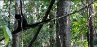 Stor succes: Edderkopaber genudsat i Peru