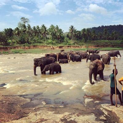 På elefanttur i Sri Lanka