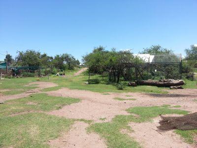 Billede fra dyrepasningsprojektet i Argentina