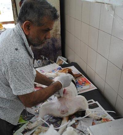 Josefine arbejdede sammen med en lokal dyrlæge