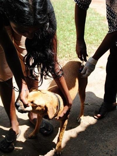 Josefine behandlede mest hunde og katte i Sri Lanka