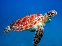 Koralblegning truer koralrevet