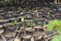 Projects Abroad planter 4000 nye træer i Madagaskar