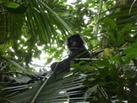 Stor genudsætning af dyr i Peru