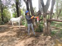 Forhold for heste forbedret i Bolivia